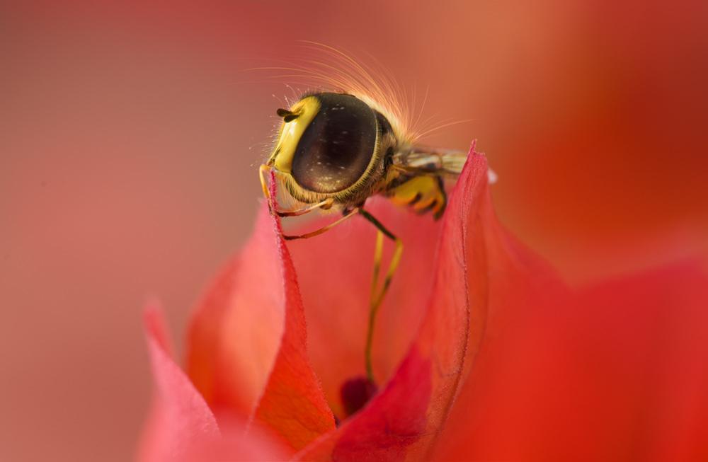 magical bee