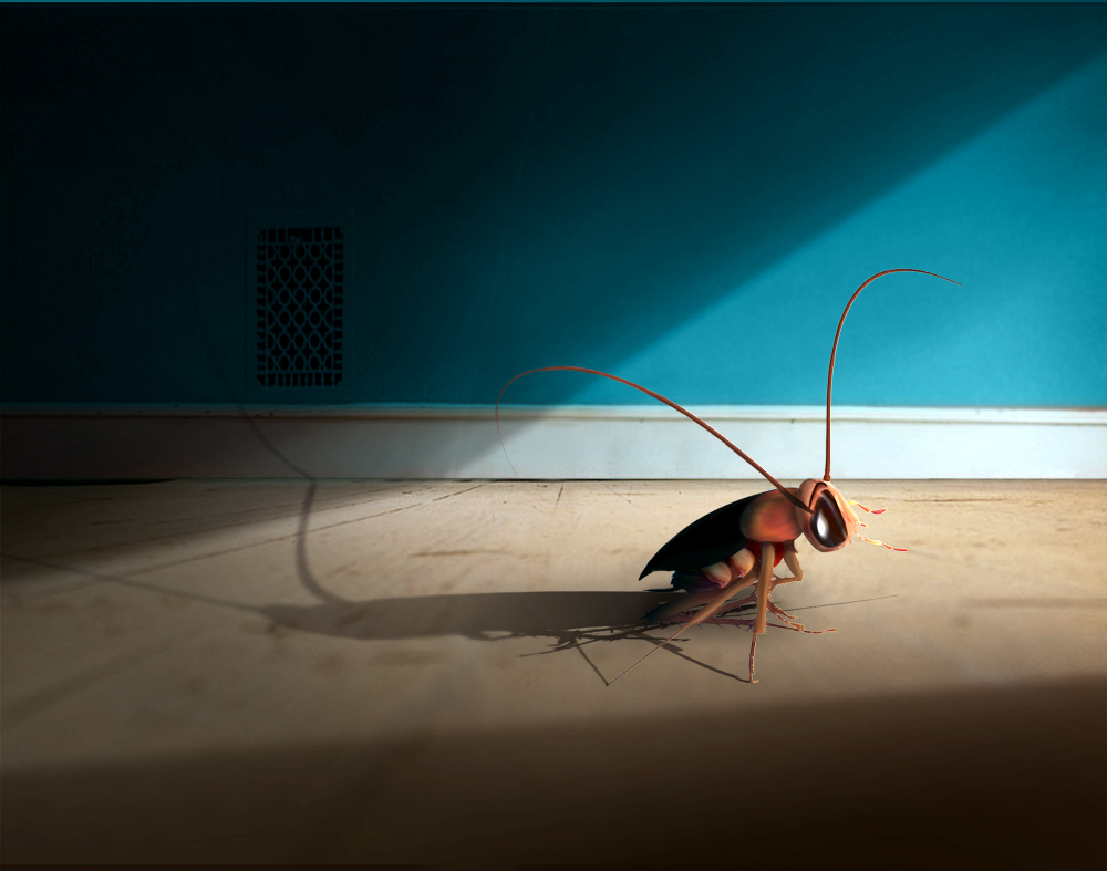 cockroach photomontage/ illustration